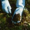 Оценка химического загрязнения почв и грунтов