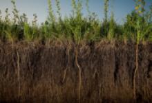 Почва как объект исследования