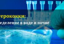 Энтерококки в воде и почве