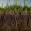 Загрязнение почв и грунтов фенолами, методы определения