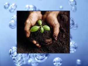 Анализ почвы и воды